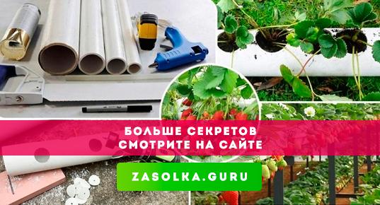 Грузинский рецепт зеленых помидоров